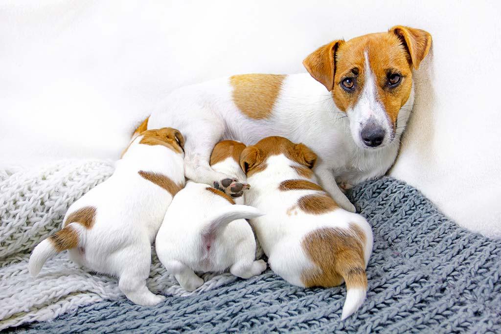 Vermi intestinali nei cuccioli: cause, scoperta, sverminazione