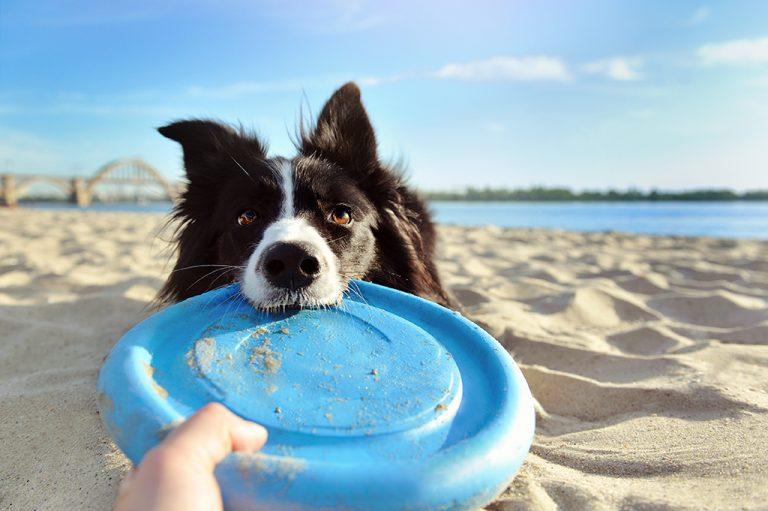 Le regole da seguire per portare il tuo cane in vacanza